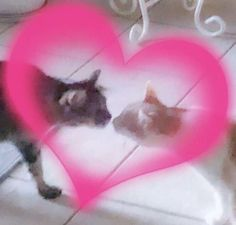 I'm not the owner of these so if you are the owner please dm me I'll give credits Memes Lindos, Cute Memes, Cybergoth, Mood Pics, Wholesome Memes, Animes Wallpapers, Reaction Pictures, Haha Funny, Cat Love