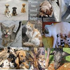 Please help stray cats and dogs. We need your help - Please help stray cats and dogs.     We need your help!