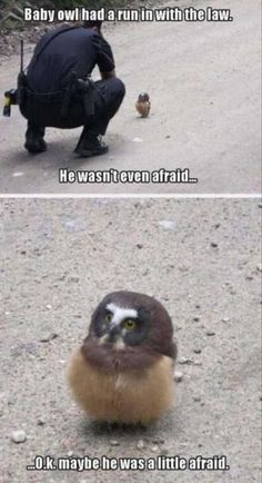 Top 30 Funny Animal Pictures and Jokes Funniest & Most hilarious Animals Pictures and Memes If you love your pets your gonna sure love these Funny pictures, sometimes your pets specially cats to random stupid things that are totally… Funny Animal Jokes, Stupid Funny Memes, Cute Funny Animals, Funny Relatable Memes, Funny Animal Pictures, Cute Baby Animals, Funny Cute, Funny Humor, Baby Pictures