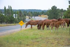 See all the Ruidoso, Alto areas Homes & Land for Sale - Updated Every 15 Minutes! Ruidoso New Mexico, New Mexico Road Trip, New Mexico Usa, Land Of Enchantment, Travel Information, Wild Horses, National Forest, Hiking Trails, Rocky Mountains