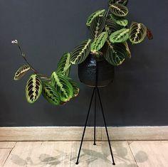 Planter + houseplant