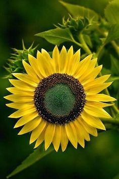 As long as we can keep growing things, we have hope. (Like this gorgeous sunflower.) We planted organic seeds this year.