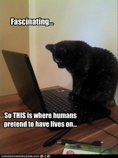 1000 Images About Funny Sayings On Pinterest Funny Cats