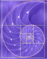 Image result for fibonacci nature