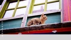 CAT IN THE ROOF WALLPAPER - (#91441) - HD Wallpapers - [WallpapersInHQ.com]