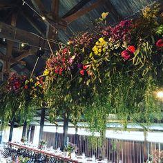 Incredible cluster hanging installs over yesterday's Bridal table for J&A 💗 ... #yeswedoloveahanginginstall #colourfulblooms #hanginginstall #weddinginspo #floralinsp #toowoombaflorist #toowoombaweddingstylist #bluewillowweddings