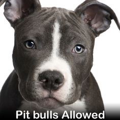 END BSL - breed specific legislation
