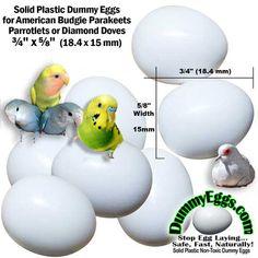 Lot 3 Eggs plastic for lovebirds parakeets forpus white