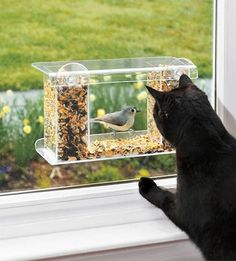 Installing a window bird feeder can give your cat something to watch for ages. The birds see a one-way mirror so cats or people won't scare them off.