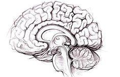 brain.jpg 485×312 Pixel