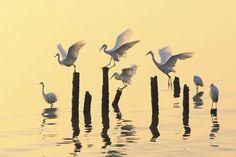 Birds in the morning light, National Geographic Traveler Photo Contest: Qing Song Liu National Geographic Photo Contest, Concours Photo, Photo Location, Photos Du, Bird Watching, Belle Photo, Nature Photos, Beautiful Birds, Pet Birds