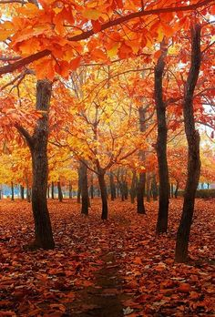 Autumn 🍁♥ The post Autumn 🍁♥ autumn scenery appeared first on Trendy. Fall Pictures, Pretty Pictures, Autumn Scenes, Autumn Aesthetic, Brown Aesthetic, Seasons Of The Year, Belle Photo, Fall Halloween, Mother Nature