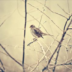 Such a pretty, cute little bird photo :)  -KWA