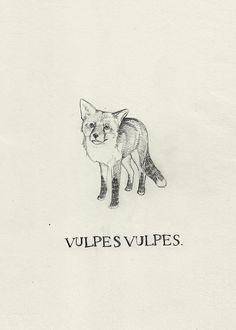 Vulpes vulpes by Peter Carrington, via Flickr