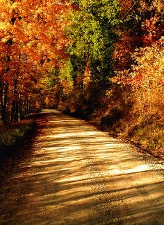 Dirt Road on a Fall Day