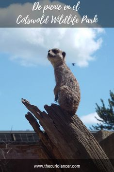 Cotswold Wildlife Park, Picnic, Oxford, Animals, United Kingdom, Parks, Culture, Viajes, Animaux