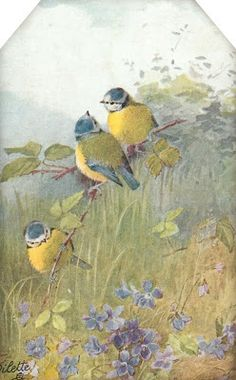 Sweet Birds & Blossoms ~ tag with 3 blue & yellow birds sitting above violets.