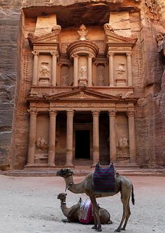 Camels In Front Of Al Khazneh Treasury Ruins, Petra, Jordan | by Eric Lafforgue, via Flickr.