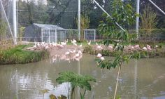 Graham O'Reilly  May Dublin Zoo has a new flamingo habitat. Reminds me of Christopher Cross guys. Remember him? Dublin Zoo, Dublin City, Christopher Cross, Irish Culture, O Reilly, Habitats, Graham, Flamingo, Around The Worlds
