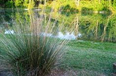 Weeds and grass can cause your pond to become unattractive.