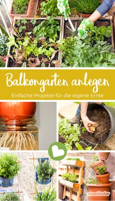 Simple projects for the balcony garden- Einfache Projekte für den Balkongarten Creating a balcony garden is not difficult at all: with these tips you can plant a healthy herb bed on the balcony – and vegetables too! Balcony Garden, Indoor Garden, Outdoor Gardens, Easy Projects, Garden Projects, Rotation Des Cultures, Alpine Plants, Little Gardens, Healthy Herbs