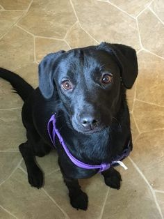 Adopted January 2016! Ember is a small lab mix that's under a year. She likes other dogs and kids. Watch for more info!