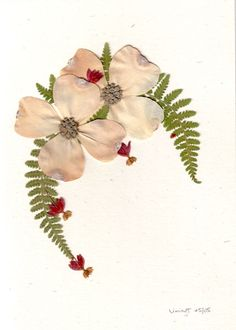 Pressed Flower Art Gallery - Cards