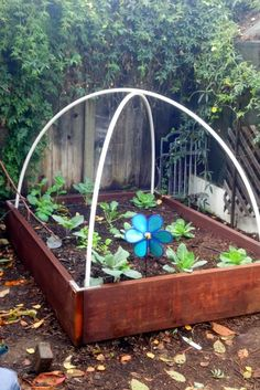 Similar to the hoop greenhouse, this mini version is made using PVC pipe and plastic covering. Though instead of creating an entire free-standing structure, this one can be built above the raised flower beds where your seedlings are already planted.