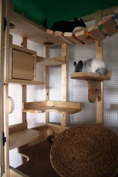 Look from inside - Cloud Play Cage Ferret Cage, Pet Ferret, Cat Cages, Chinchilla Care, Cat Exercise Wheel, Bryer Horses, Rabbit Hutches, Cat Room, Pet Rabbit