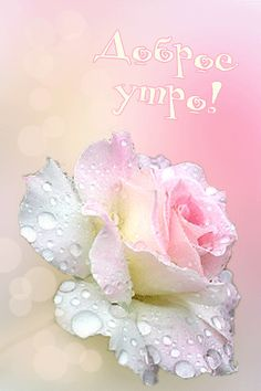 Beautiful Flowers, Beautiful Pictures, Pink Themes, Morning Images, Good Morning, Animation, Crystals, Rose, Fun