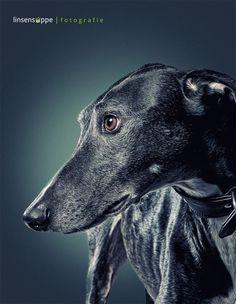 Retratos de cães por Daniel Sadlowski | Revelando Ideias