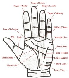 Learn basics of palmistry and how the chart is interpreted with this easy to understand palm-reading guide which contains information to help interpret the secrets that lie hidden within the palms of your hands. Wiccan, Magick, Witchcraft, Palm Reading Charts, Palm Reading Lines, Palm Lines, Palm Reading Right Hand, Basic Palm Reading, Pseudo Science