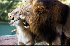 king and queen (2)