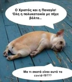Funny Greek Quotes, Funny Picture Quotes, Funny Photos, Funny Dogs, Funny Memes, Jokes, Have A Laugh, Just Kidding, Funny Art