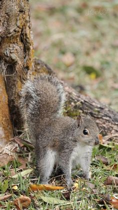 Vertical stock video of a squirrel who is suddenly surprised and quickly jumps in the air. Squirrel Video, Flying Squirrel, Cute Squirrel, Baby Squirrel, Cute Little Animals, Baby Animals, Funny Animal Memes, Funny Animals, Beautiful Horses