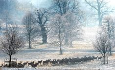 deer herd at Studley Royal near Ripon, England on a cold and frosty morning. A Touch Of Frost, Homes England, Uk Weather, Winter Magic, Days Of The Year, Winter Springs, English Countryside, Natural Phenomena, Walking In Nature