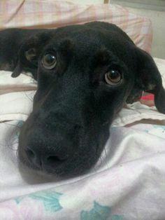 Luna Bianca *;* Puppy Dog!
