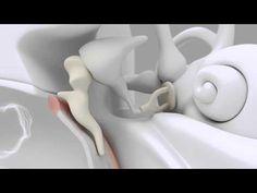 Découvrez le fonctionnement du système auditif! - Clin d'oeil Opticiens