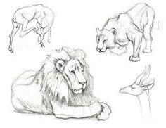 Imagini pentru drawings animals