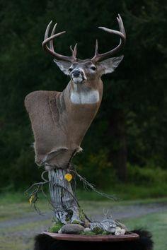 Quality Whitetail Pedestal Deer Mount