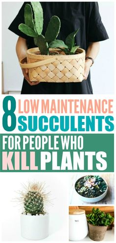 These succulent garden ideas are THE BEST! I'm so happy I found these GREAT tips on houseplants! Now I have some great ideas on how to take care of my houseplants! #houseplants #homehacks #homedecor #succulents #succulentlove #lifehacks