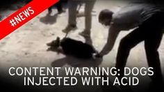 PETITION NOVEMBER 2016 Horrific footage shows the dog being tied up while objects are thrown at it. Some have called for the FBI to investigate, while others suggested those torturing the dog should themselves be tied up. Dozens also called for the video to be flagged to the authorities in a bid to catch those responsible. Another suggested reporting it to Interpol, though it is believed to have been filmed somewhere in India. #animalrights