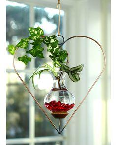 Heart Hanging Water Garden Live Plants Included Indoor