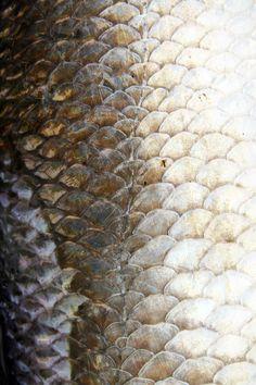 Fish scales - Fazer a roupa da barbie assim, desenhar no tecido as escamas e depois pinta-las