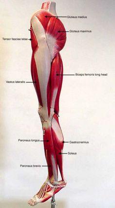Como adelgazar los muslos de las piernas yahoo