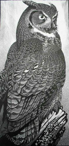Great Horned Owl ~ Wood Engraving ~ Colin See-Paynton ~ The Wildlife Art Gallery Más Owl Art, Bird Art, Davidson Galleries, Owl Illustration, Great Horned Owl, Art Graphique, Wood Engraving, Wildlife Art, Painting & Drawing