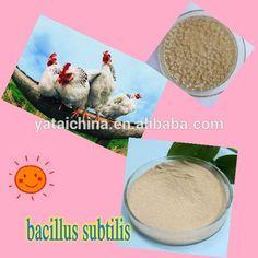 broiler feed additive >20 Billion CFU/g bacillus subtilis(truthful seller) #addit, #Truths