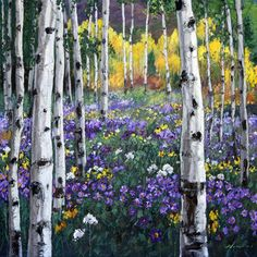 Mountain Meadow, 36x36 - Aspen Tree Birch Paintings - Birches Art Trees by Jennifer Vranes