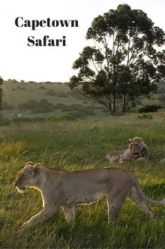 Looking for a Safari on the Garden Route near Capetown? We loved our experience at Schotia Farms.