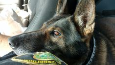 I've often wondered what is he thinking here. K9 Officer, Law Enforcement, Dogs, Animals, Life, Animales, Animaux, Pet Dogs, Police